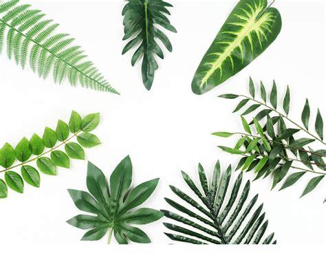 gambar daun latar putih contoh gambar latar