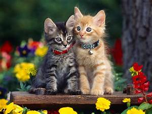 Multicolor, Flowers, Cats, Animals, Kittens, 1600x1200, Wallpaper, High, Quality, Wallpapers, High