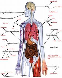 Different Route Of Inps Exposure To The Body And Vital Organs That May