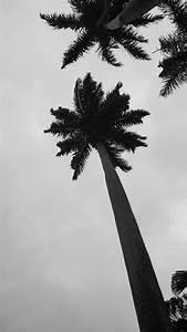 Palme Schwarz Weiß : kostenloses foto zum thema palme palmen schwarz und wei ~ Eleganceandgraceweddings.com Haus und Dekorationen