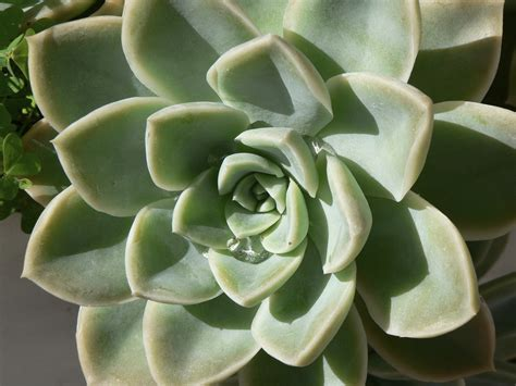 types of succulents what is a succulent plant succulent vs cactus and other succulent plant characteristics