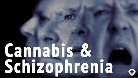 study investigates adolescent cannabis  brain