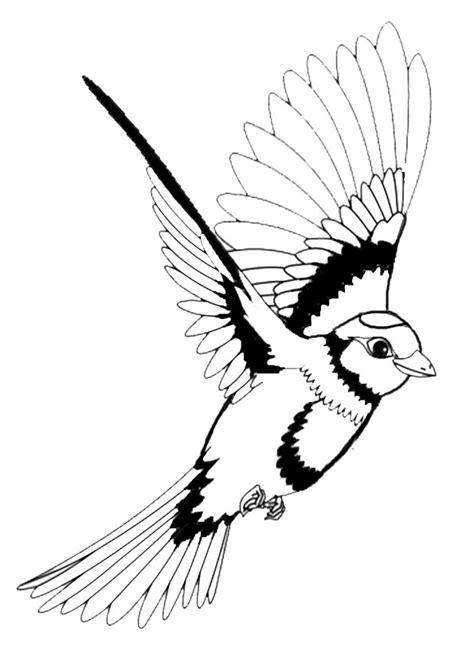 malvorlagen vogel kostenlos batavusprorace