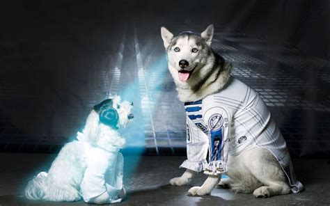 May the 4th Be With You: Pups Act Out Your Favorite Star ...