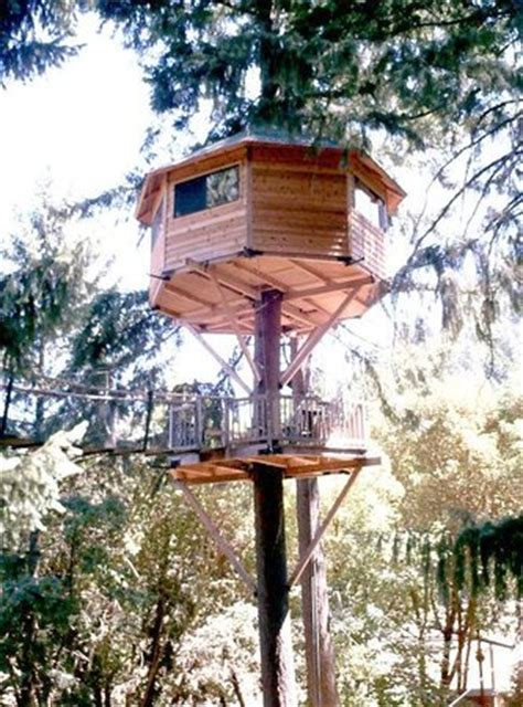 Peacock Perch Treehouse  Picture Of Out 'n' About
