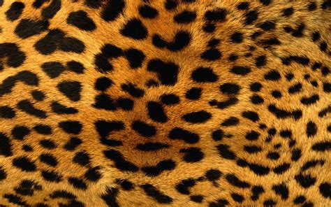Animal Pattern Wallpaper - animals patterns fur leopard print wallpaper 2560x1600