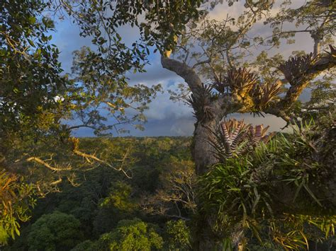 rainforest national geographic society