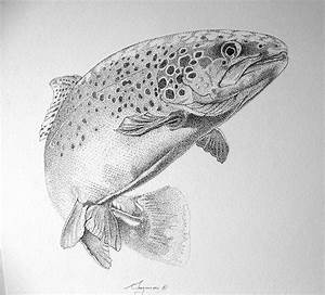 25+ best ideas about Trout Tattoo on Pinterest | Brown ...