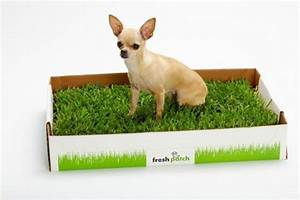real grass dog potty for apartments