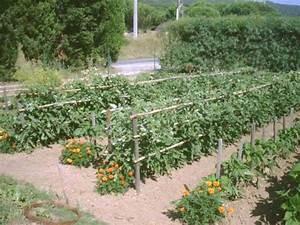 Comment Tuteurer Les Tomates : syst me de tuteurage pour tomates croissance d termin e ~ Melissatoandfro.com Idées de Décoration