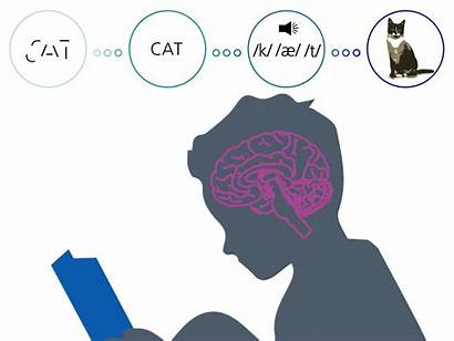 Process Reading Complex Brain Audio Learning Literacy