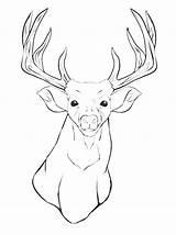 Deer Coloring Pages Head Mule Outline Animal Drawing Buck Whitetail Elk Doe Printable Horn Getcolorings Getdrawings String Antlers Books Svg sketch template