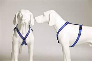 Hunde Größe Berechnen : gr ssentabelle f r hundegeschirre ~ Themetempest.com Abrechnung
