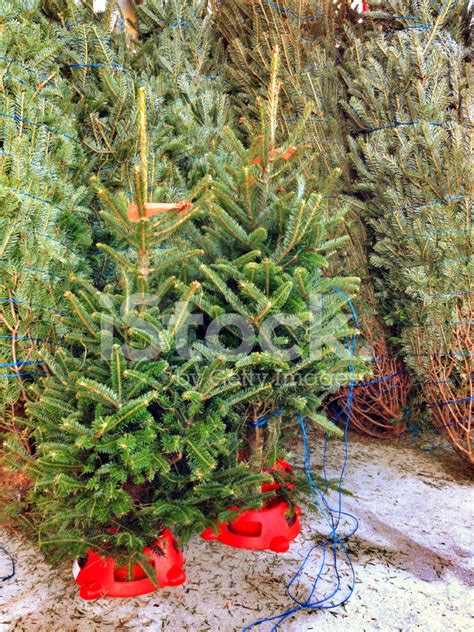 christmas trees for sale stock photos freeimages com
