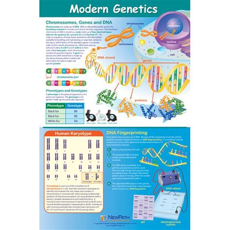 of modern genetics 28 images contributors to biological knowledge ppt modern genetics