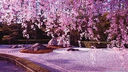 Sakura Flower Wallpapers Blossom Japan Cherry Lake