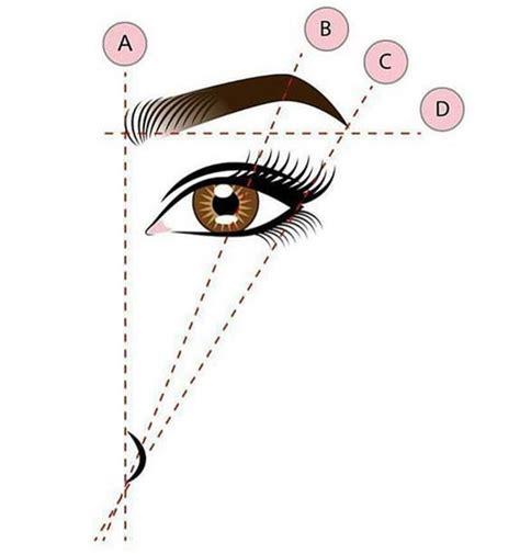 Restructuration des sourcils comment restructurer ses sourcils Elle