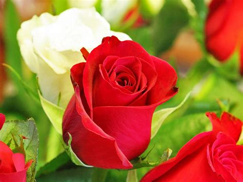 gambar bunga cantik indah ayeeycom