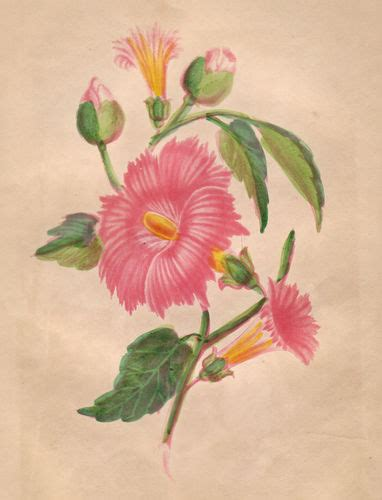 fiori botanica botanica fiori frutta la puntasecca ste antiche