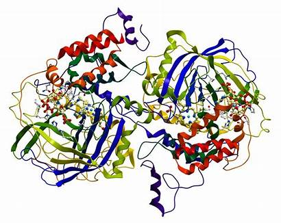 Biocatalysts Explanation Enzymes