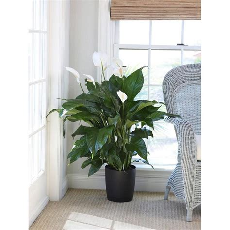 Best Indoor Window Plants by 9 Best Indoor Plants For Your Home Or Office In Singapore