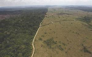 More Than Half of Amazon's Trees Are Heading To Extinction ...