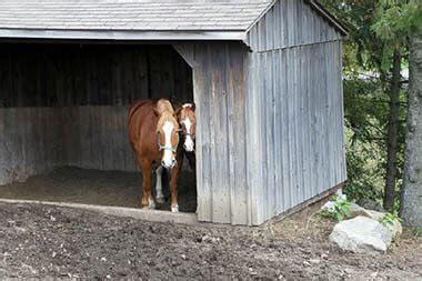 true value sheds run in shed plans building a run in shed horizon