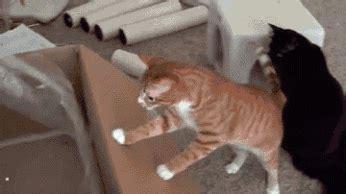 imagenes  muestran la logica de los gatos