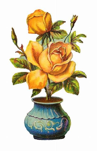 Rose Yellow Vase Flower Roses Antique Digital