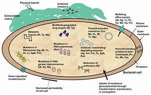 Innate And Acquired Antibiotic