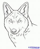 Coyote Drawing Coloring Animal Drawings Draw Face Wolf Coyotes Howling Animals Sketch Tattoo Step Forest Prairie Dibujo Cool Dibujos Zentangle sketch template