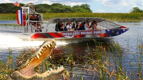 Everglades Boat Tours Alligators by Everglades Airboat Tour Alligator Show Miami Expedia