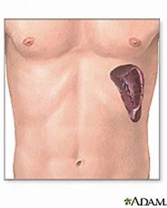 What Is a Spleen? | Wonderopolis