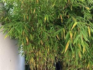 Bambus Braune Blätter : igelhaus neudorff igelhaus g nstig online kaufen ~ Frokenaadalensverden.com Haus und Dekorationen