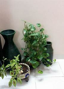 An Indoor plant decoration for a corner area of the house ...