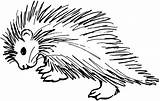 Coloring Porcupine Printable Ages Sheets Educative Educativeprintable sketch template