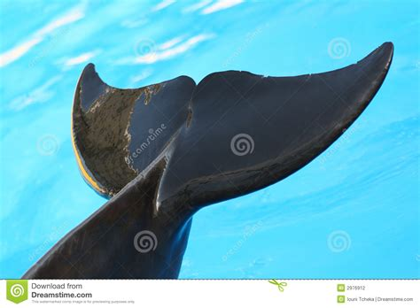 tail   dolphin stock photography image