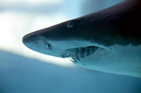 blacktip reef shark ocean treasures memorial library