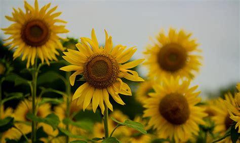 flowers  brighten  day