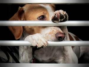 deckakt hund ohne hängen