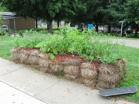 Where To Buy Straw Bales For Gardening by Straw Bale Garden Learn About Growing