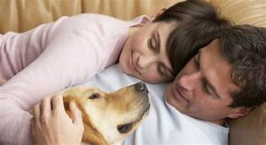 Healthwise Dog39s Empathy Brings Healing To Depressed