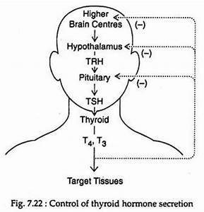 Thyroid Hormone: Biochemistry, Synthesis and Secretion ...