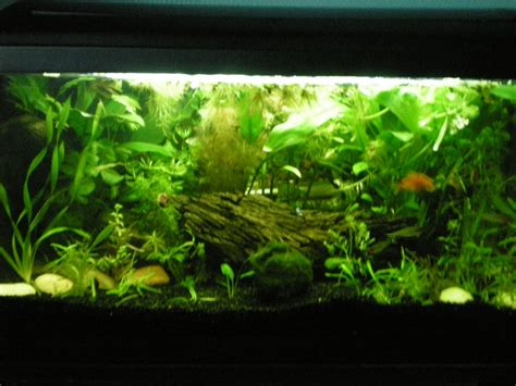 siege oeuf pas cher amenagement aquarium eau douce 28 images am 233