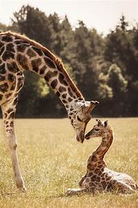 30 Cute Baby Animals That Will Make You Go 'Aww' - Fantastic88