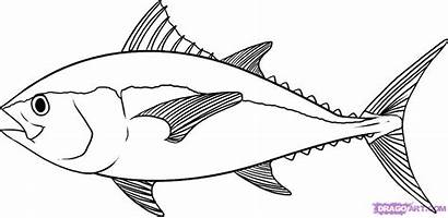 Fish Drawing Tuna Draw Coloring Step Pages