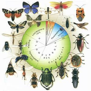 1  Insects Diversity  Image From Grimaldi And Engel  2005