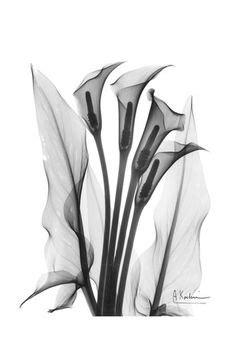 33 Best X-ray Plants images | Art photography, Art, Xray flower