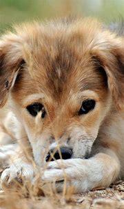 Animals Wallpapers Animals iphone wallpaper 1080x1920 ...
