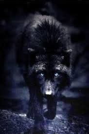 Alpha Wolf Wolf Pack Wallpaper by Image Result For Alpha Wolf Siberian